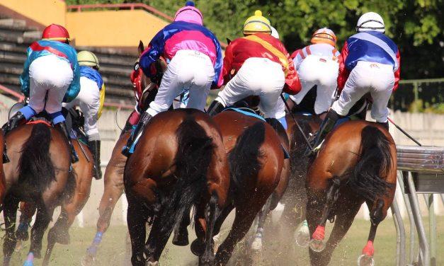 Retour à la normale de l'entraînement ce mardi, du moins pour les chevaux…
